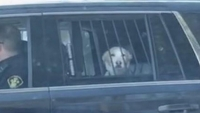 Canada Dog 'Arrested' For Chasing Deer, Ends Up Behind Bars